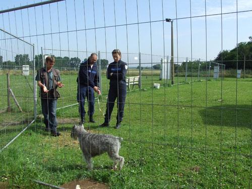 Maître-chien - Agent de sécurité - Formation maitre chien